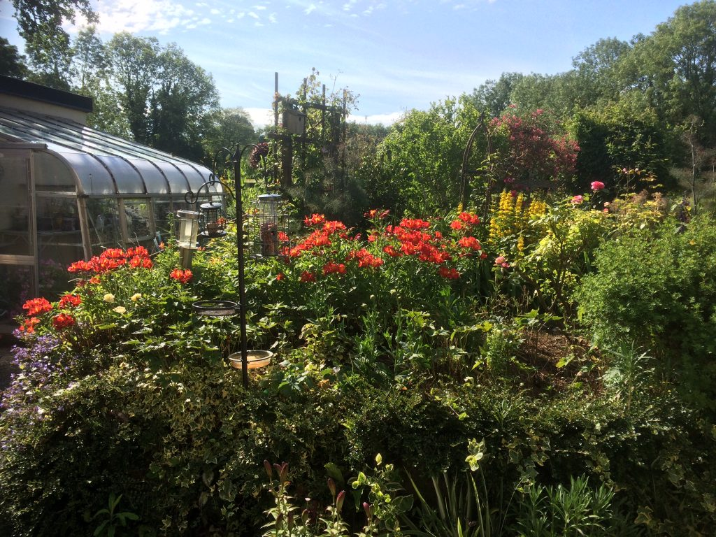 Rear Garden June 2020